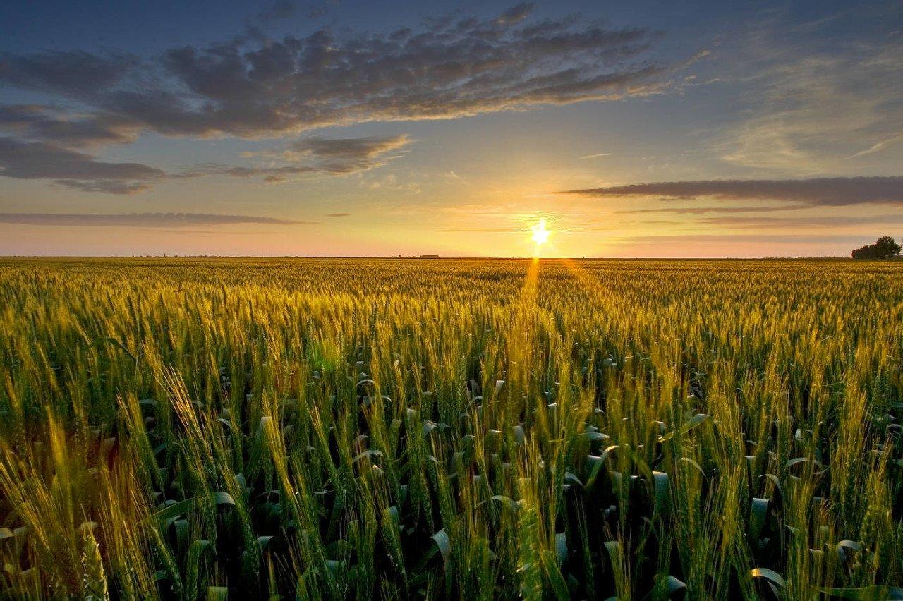 生物育种板块拉升,农业农村部:实施打好种业翻身仗行动方案