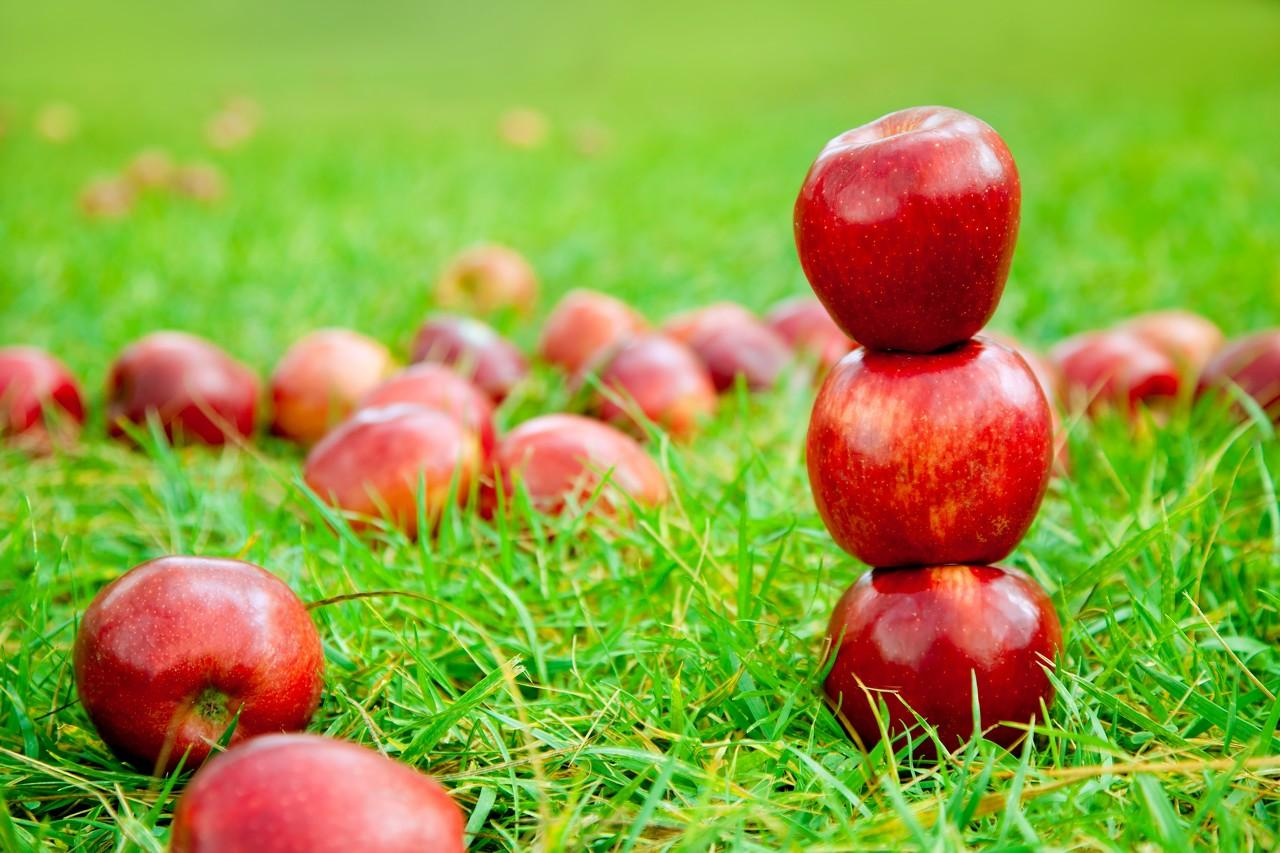 一个苹果的十倍身价之旅