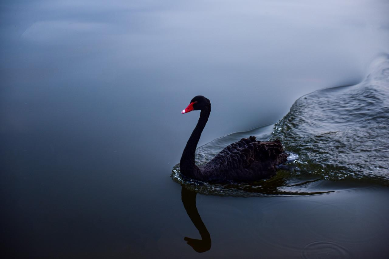2020年第一只黑天鹅飞走了