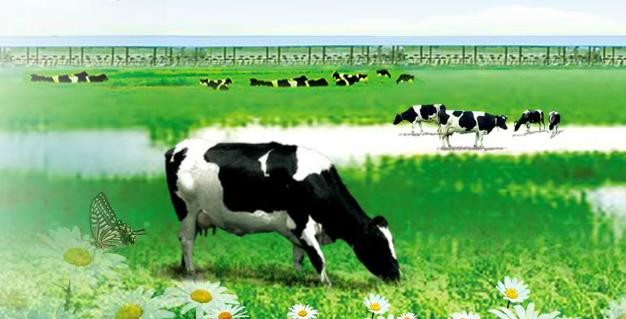 手握17亿的科迪乳业(002770.SZ)被爆欠1.4亿奶款,孰真孰假?