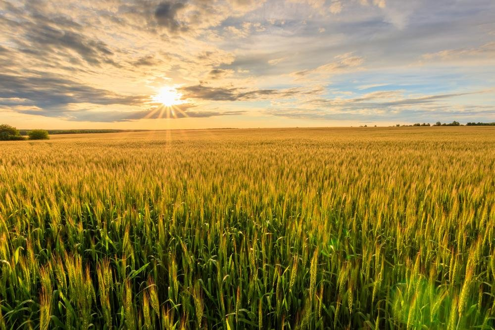 任泽平:全球贸易体系大变局与我国农业国际竞争战略取向
