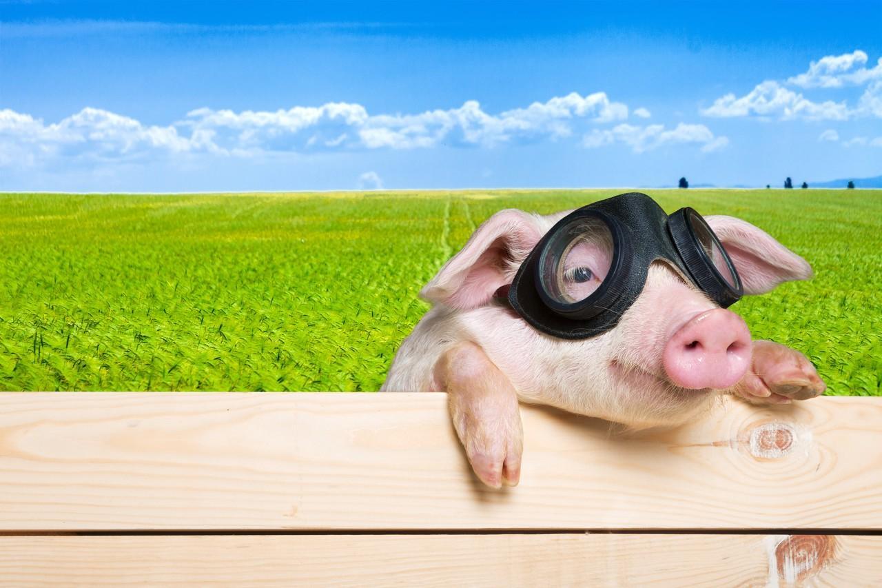猪肉价格走高对CPI影响几何?