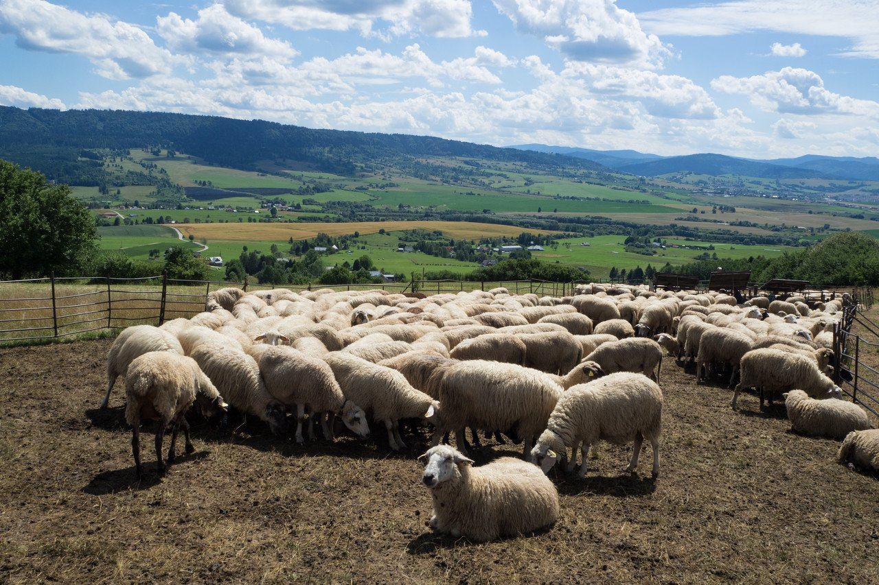 从国家贫困县到深交所,红星美羚乳业能否借道上市走出大山?