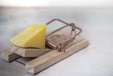 妙可蓝多的财务乱局   谁动了它的奶酪?