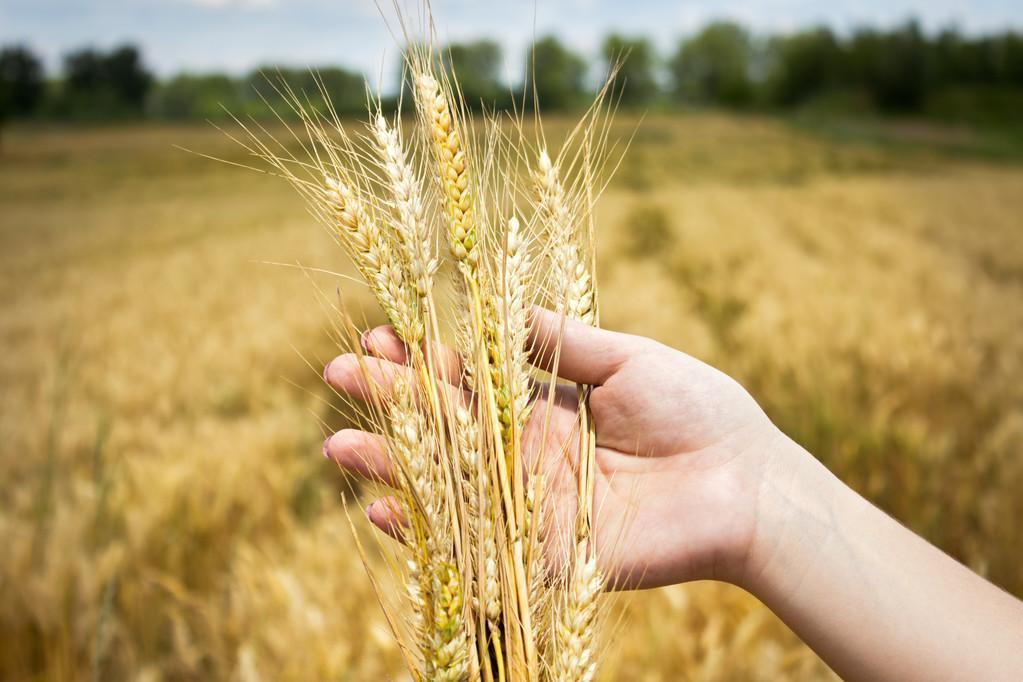 疫情告急!全球多国封关:限制粮食出口,粮食危机要来?A股批量涨停潮先来了