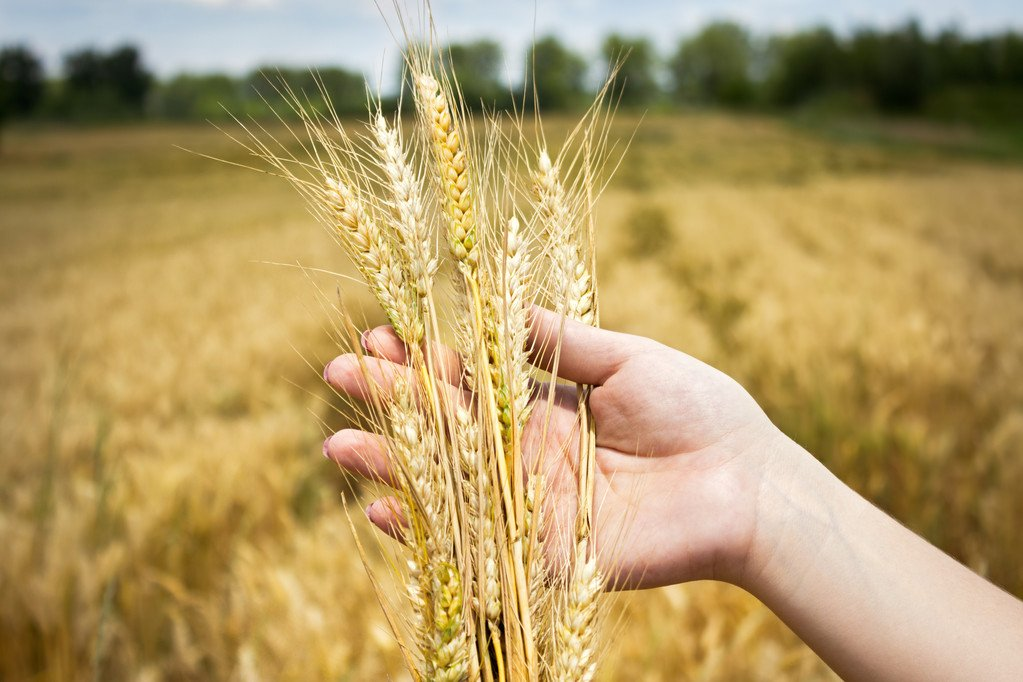 What is the situation of grain production?How to look at the rise in food prices?The Ministry of Agriculture and Rural Affairs responded