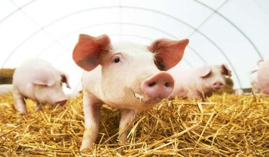 猪价跌至4个月新低!养殖股会怎么走?