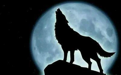炮轰学区房:这次,狼真的来了